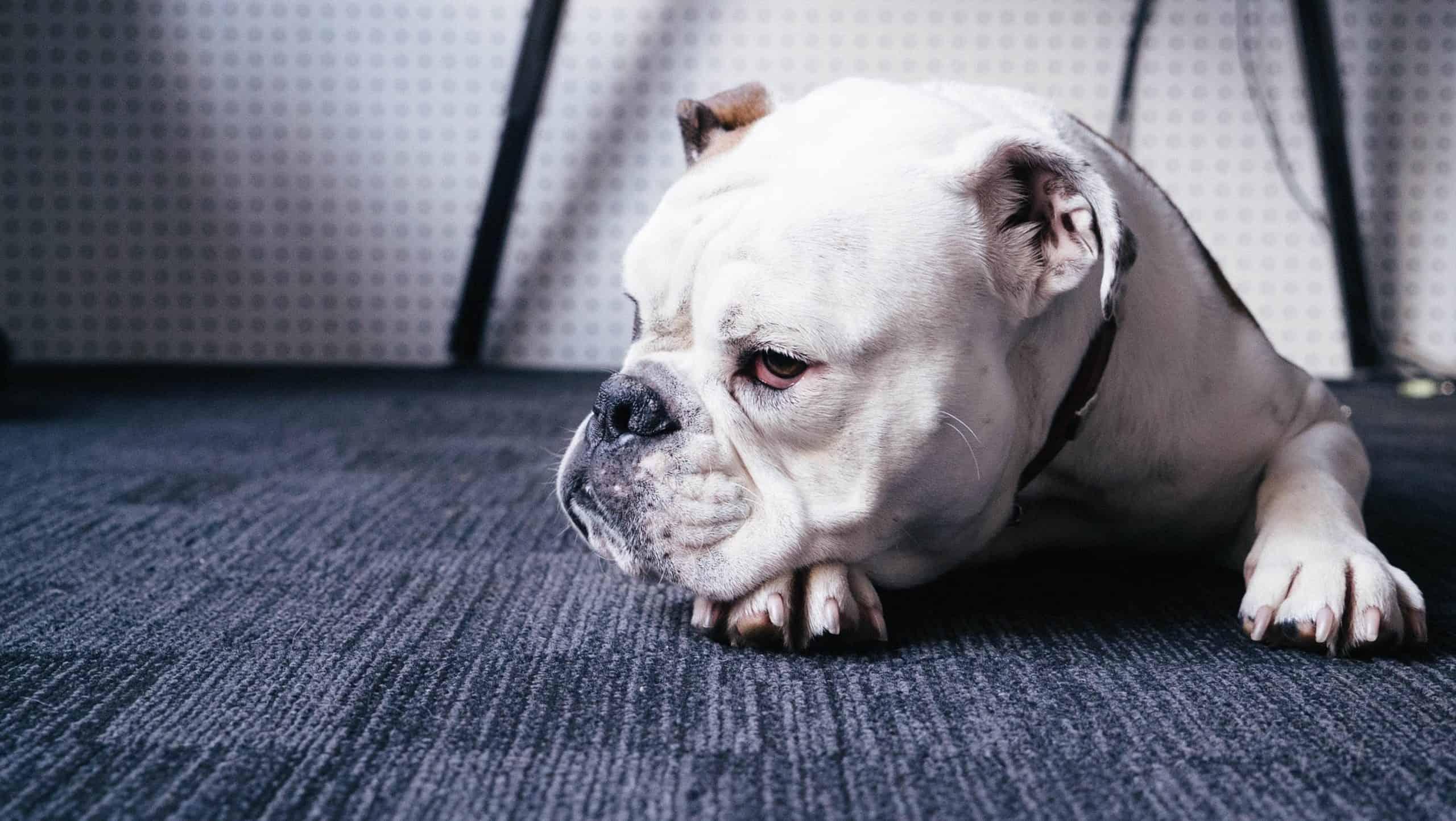 Dog © Unsplash