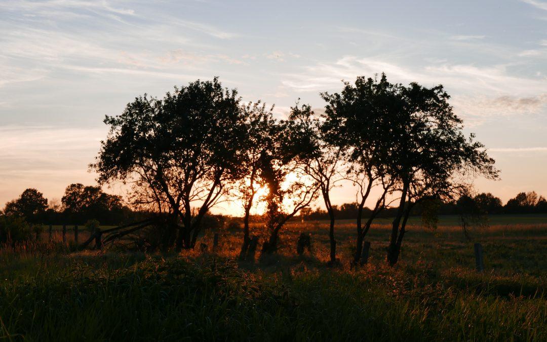 Brandenburger Prärie Sunset, Fläming, Workation Retreat |©Anne Seubert